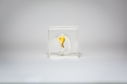 Marion Catusse, Les résines, 2014 Resin, polyurethane, agar agar, ink and glue, 5 cm x 5 cm