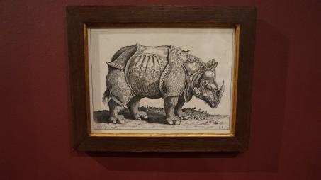 Jeremias Wolff (1663-1724), d'après Alfred Dürer, Rhinoceros, 18ème