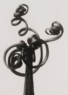Karl Blossfeldt, Urformen der Kunst, 1928 Courtesy The Walther Collection and Karl Blossfeldt Archiv / Ann und Jürgen Wilde