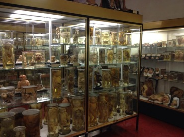 Musée Dupuytren