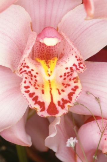 Fleurs (Flowers) 1985 / 2008 impression numérique H. 153,7 cm ; L. 101,6 cm collection privée, New York © Nobuyoshi Araki/Courtesy Taka Ishii Gallery