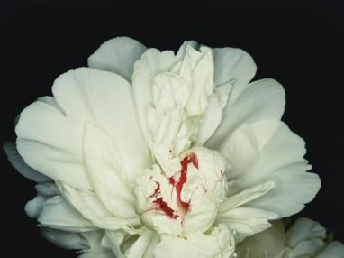 Fête des anges : scènes de sexe (Feast of Angels : Sex Scenes) 1992 impression ultérieure directe RP H. 45,4 cm ; L. 60,1 cm Taka Ishii Gallery, inv. NA-PH_AbA_014 © Nobuyoshi Araki / Courtesy Taka Ishii Gallery