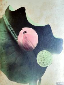 Kazumasa Ogawa (1860-1929) F52 Lotus épreuve à l'albumine sur papier 1877-1882 inv. AP11815, musée national des arts asiatiques – Guimet © Musée national des arts asiatiques – Guimet (dist. RMNGP)/Photo : MNAAG